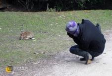 Кролики на Огненной Земле - не редкость