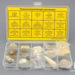 Коллекция палеонтологическая (15 образцов)
