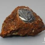 Вивианит, 7,3х4,2х4 см