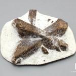 Ставролит в сланце, 7,5х5,8х2,8 см