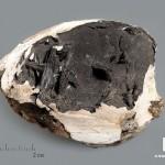 Вивианит в раковине, 6,3х5х2,6 см
