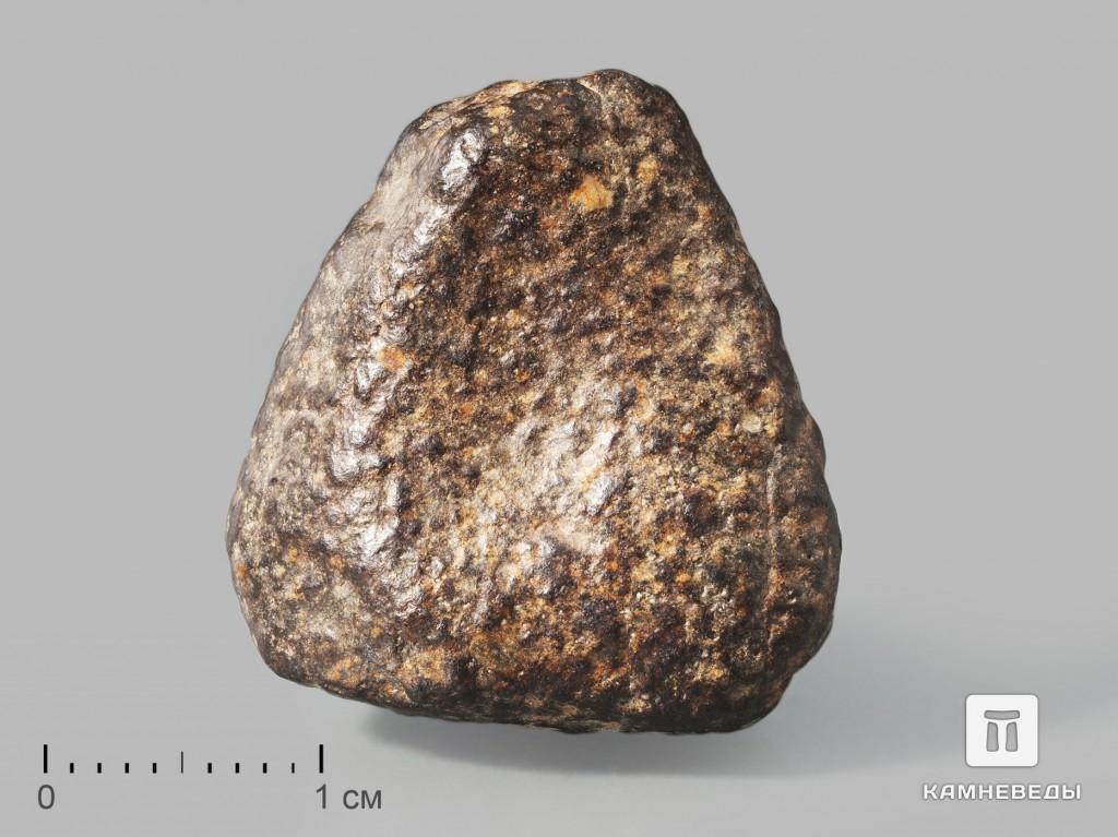 Метеорит NWA 869, 2,4х2х1,6 см (11-12 г)