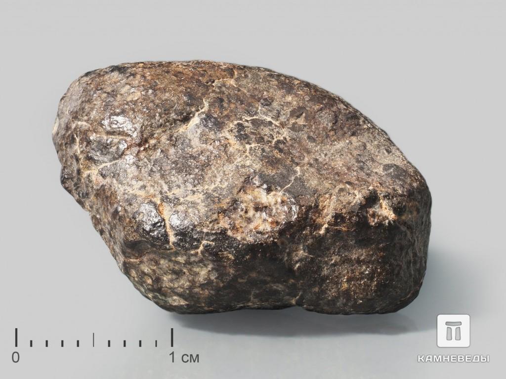 Метеорит NWA 869, 2,5х2х1,5 см (13 г)