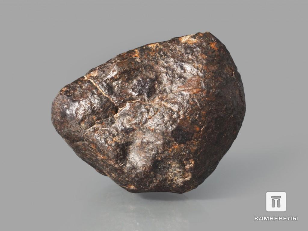 Метеорит NWA 869, 1,8-2,5 см (6-7 г)