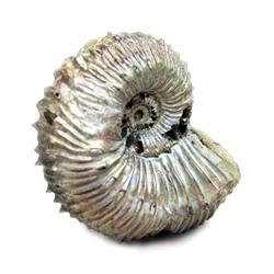 ФОССИЛИИ (палеонтология/окаменелости)
